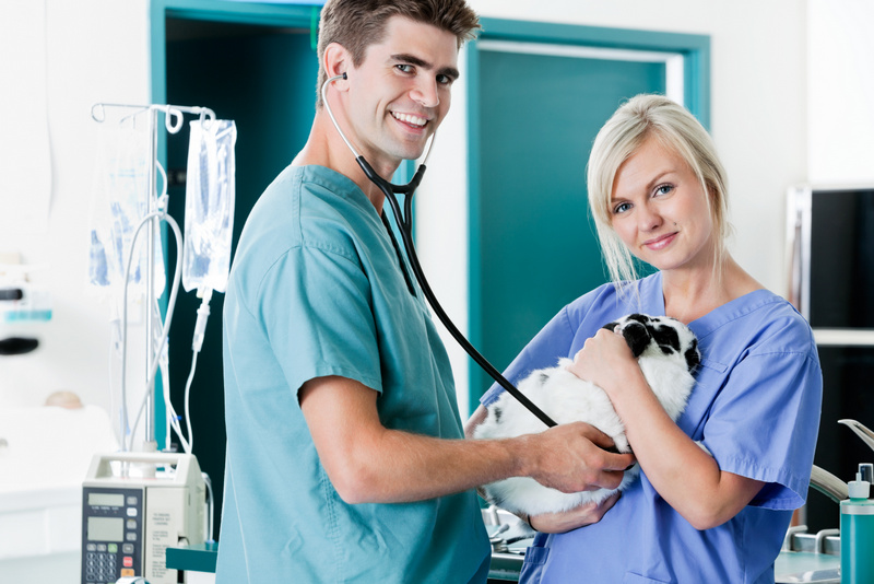 Veterinary Assistant dgree courses